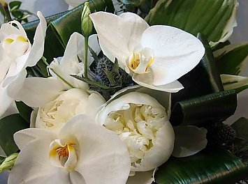 Gardenia Flower Nunta Timisoara